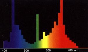 Под светом люминeсцeнтных лaмп Osram Fluora растения хорошо растут в помещениях без дневного света или с недостаточным его количеством. Люминесцентные лампы Osram Fluora имеют особое излучение с преобладающей составляющей синего и красного цветов, аналогичное излучению, способствующему фотохимическим процессам. Благодаря такому излучению, лампа эффективна для подсветки комнатных растений. Лампы для подсветки комнатных растений используются разные в зависимости от типа светильника и условий содержания растений. Osram Fluora одна из самых популярных ламп для комнатных растений.