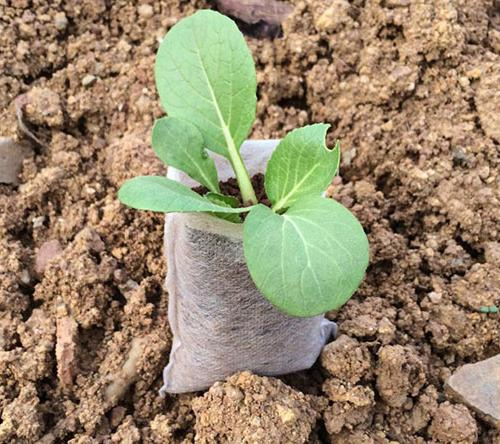 Мешок для растений из спанбонда, 1 л
